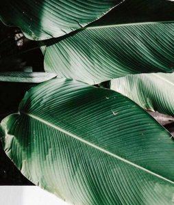 Salón Rafael Dueñas _Productos-organicos-para-el-cabello-hojas ficus